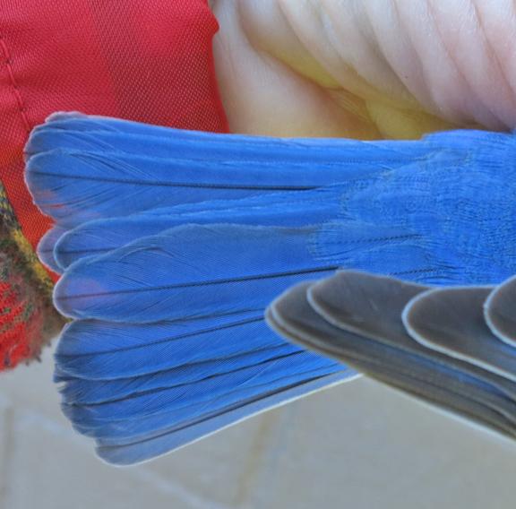 IMG_7985 tail