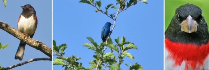 Stuart birds