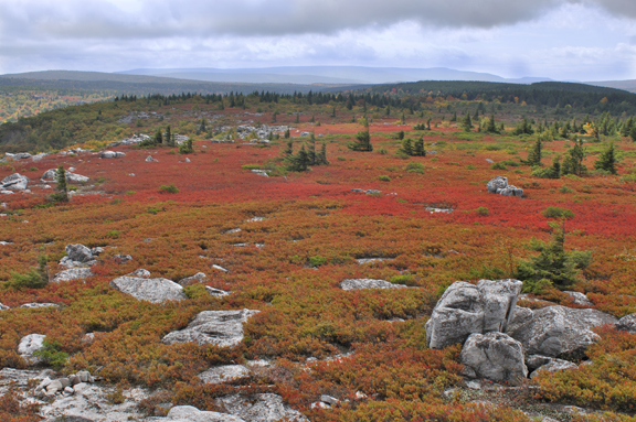 Dolly Sods Wilderness fall scenic