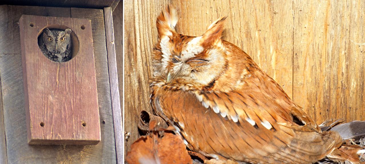 easo nest box